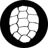 78715 Turtle Shell